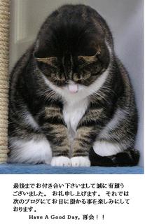 お辞儀猫.png