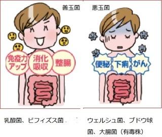 ダイエット効果を抜群に進める腸内フローラ法とは!?