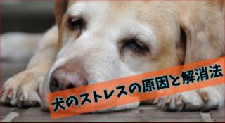 ストレスが無さ過ぎてストレスフルな現代の犬!?