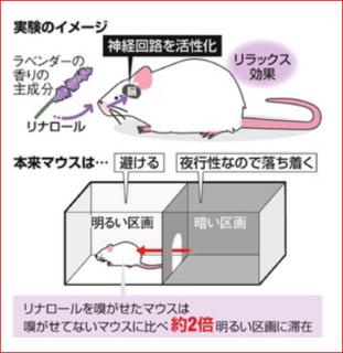 マウスで実験.PNG