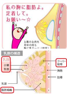 乳房の構造.png