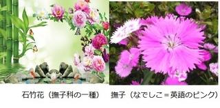合成撫子.jpg