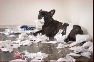 犬のストレス3.PNG