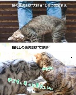 猫の愛情表現.jpg