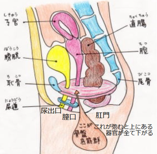 骨盤底筋.PNG