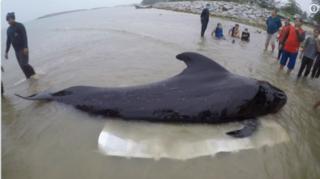 鯨の死骸.PNG