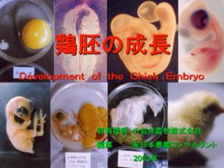 鶏胚.PNG